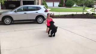 Nurse reunited with her dog after a month of not seeing each other