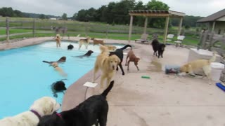pool for dogs - Video