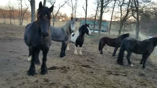 Silly horses nervously watching a bunny  - Video
