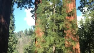 Driving Through Sequoia National Park