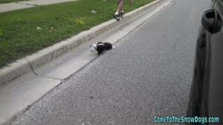 Driver rescues skunk with head caught in plastic cup - Video