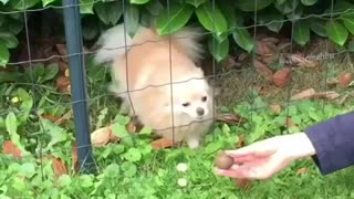 Fluffy dog slips through fence