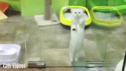 A Cat playing in The Bathroom Behind The Glass.