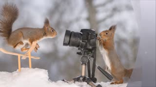 Fantastic photos of squirrels and winter sport - Video