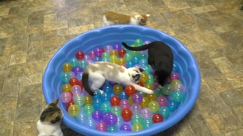 Kittens And A Mini Ball Pit = ADORABLE!