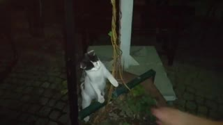 Cute Cat Wants To Play  - Video