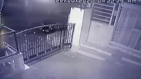 Leopard makes stunning leap over closed gate while chasing pet dog in India
