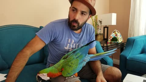 Macaw loves to dance to 'Game Of Thrones' tune