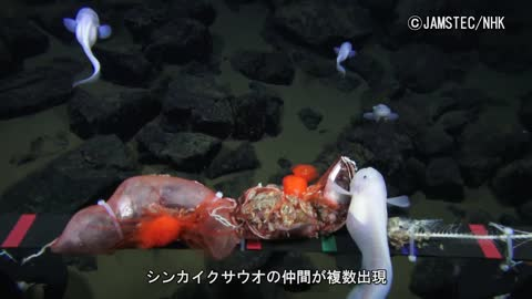 Scientists Film Fish At Deepest-Ever Depth In Mariana Trench