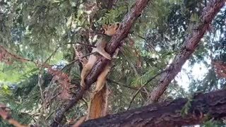 Antonio the Wild Squirrel Cools off on a Wet Branch