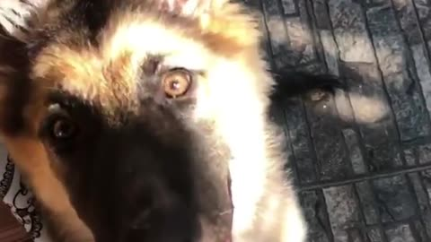 Dog dont like to be recorded