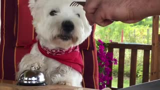 Smart Dog Rings A Bell For Tasty Treats