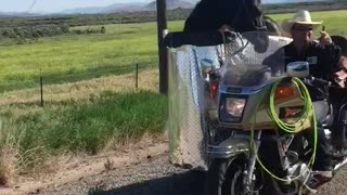 Man Transports Horse In A Sidecar Of A Motorcycle He Has Made - Video