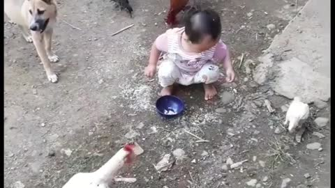 Sweet little toddler helps feed the chickens