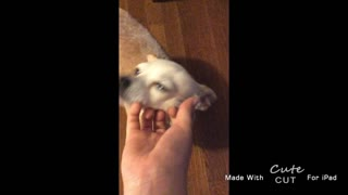 Cute cute cute dog - Video