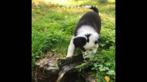 Dog Trying To Drink in The Garden