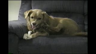 Dog's Hind Leg Possessed - Video