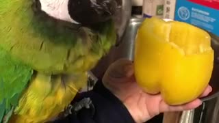 Trying to cook with a parrot  - Video