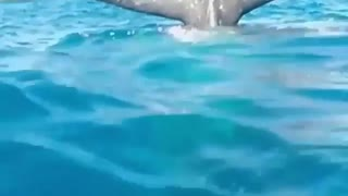 Big dolphin tail outside water for tourists fun
