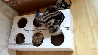 Adorable Kittens Can't Get Enough Of Homemade Box Toy! - Video