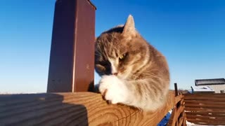 The Cat Scratched The Wood · Free Stock Video