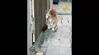 FUNNIEST And CUTEST CAT VIDEOS 2021 😸-lovablecats😻 |