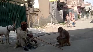 Monkey & Goat circus in Lahore Pakistan  - Video