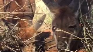 Indi Teaches to Eat - Video