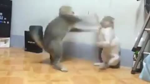 Epic Cat Fight #Very Funny