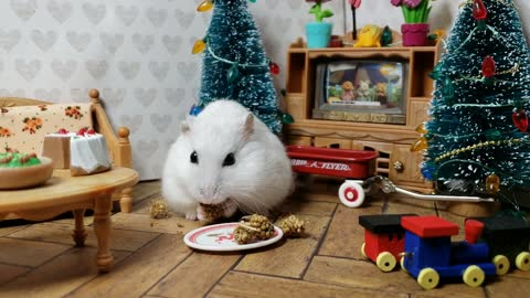 Cute hamster enjoys tasty Christmas treat