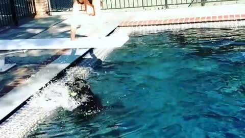 Collab copyright protection - woman handstand on diving board fall