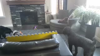 Dog just wants to be included in the fun!