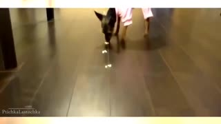 funny animal video best funniest - Video