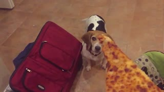 Dog Has Weak Pizza Skills