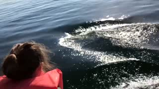 Dolphins Show off for Daughter