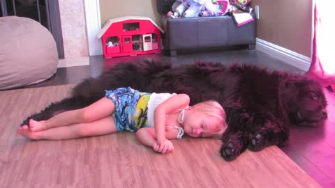 Toddler and dog share nap time