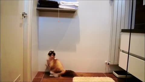 Determined cat gets what he wants