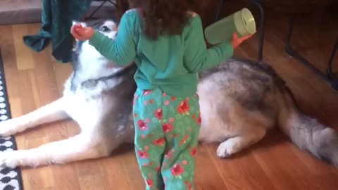 Precious 2 year old little girl comforts Alaskan Malamute