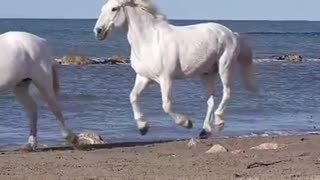 Let The Horses Run Free! - Video