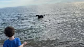 Service Dog: Memorial Day at the Beach!