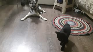 Cat and dog are the best friends