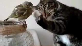 Cat is showing love to bird