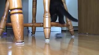 Kitten afraid of remote control mouse - Video