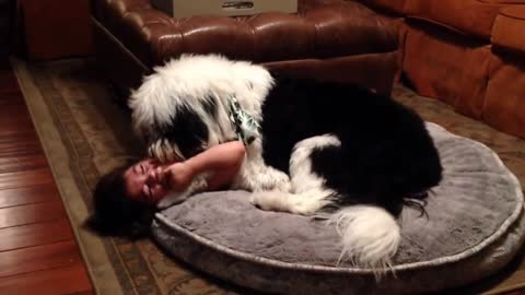 Emotional Dog Won't Stop Giving Wet Kisses To A Ticklish Little Girl
