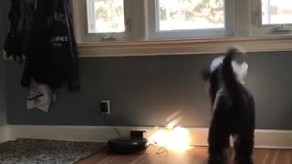 Dog waiting for pizza delivery - Video