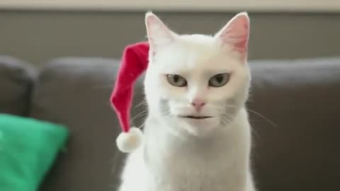 Laughing with singing cats Jingle Bells