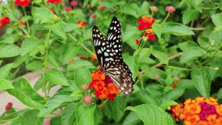 butterfly awesome flower