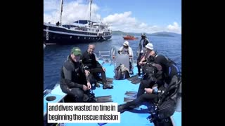 Divers Free Family Of Whale Sharks From Net