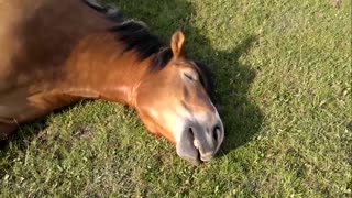Person approaches horse sleeping on grass. What they capture on film is priceless - Video
