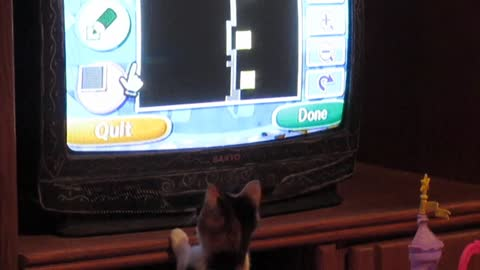 Cat attempts to pounce Wii Mouse on TV